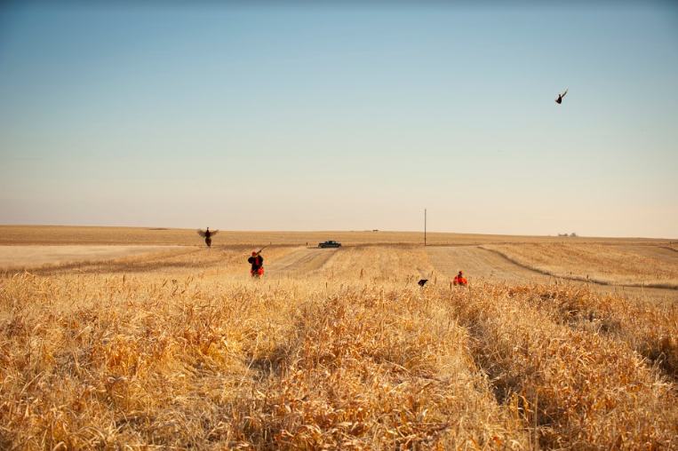 The Best Lodges for Pheasant Hunting in South Dakota